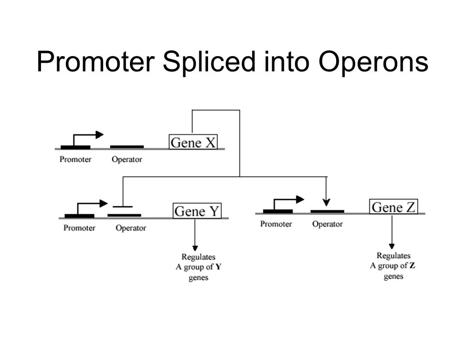 Promoter Spliced into Operons