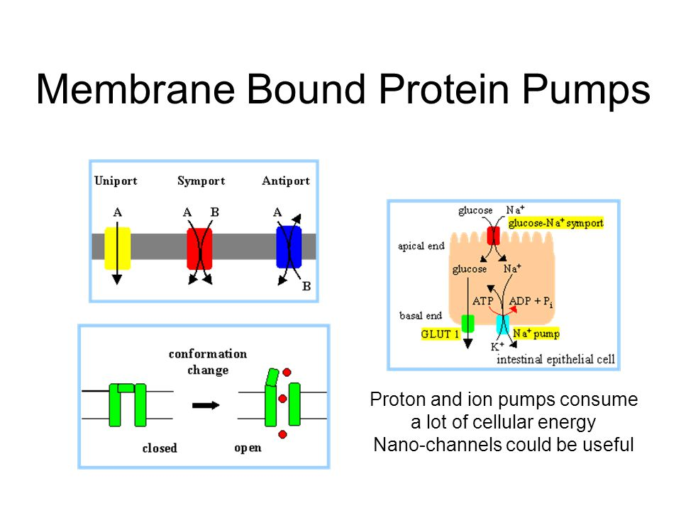 Membrane Bound Protein Pumps Proton and ion pumps consume a lot of cellular energy Nano-channels could be useful