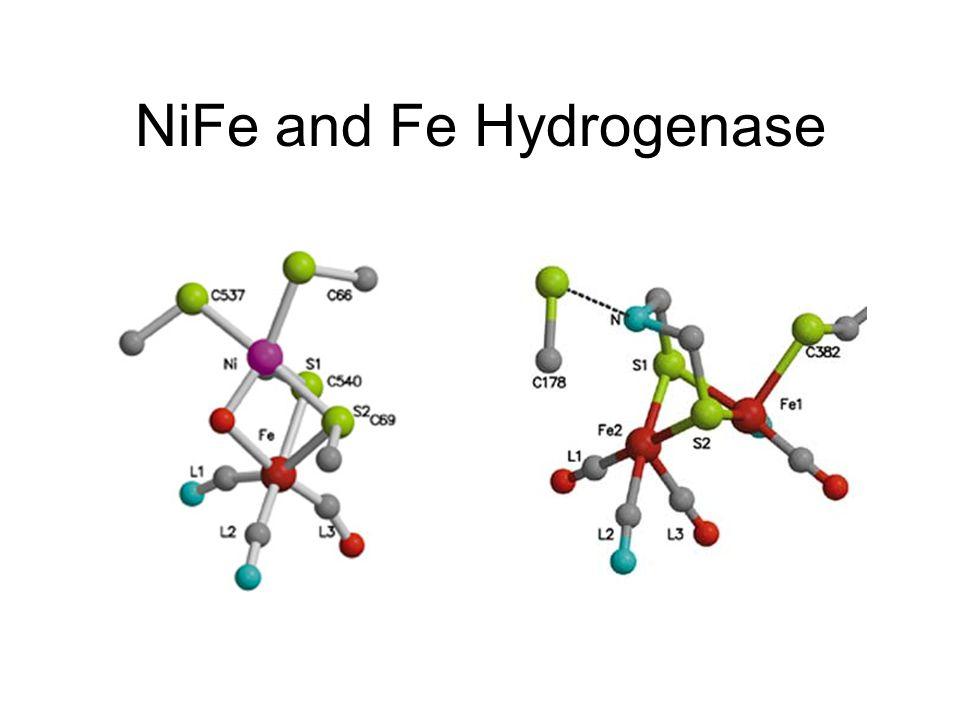 NiFe and Fe Hydrogenase