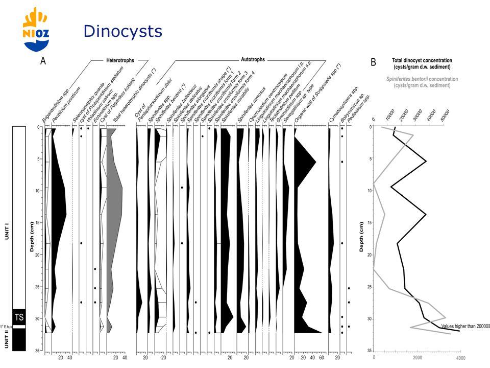 Dinocysts