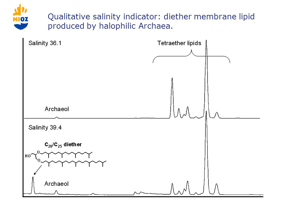 Qualitative salinity indicator: diether membrane lipid produced by halophilic Archaea.