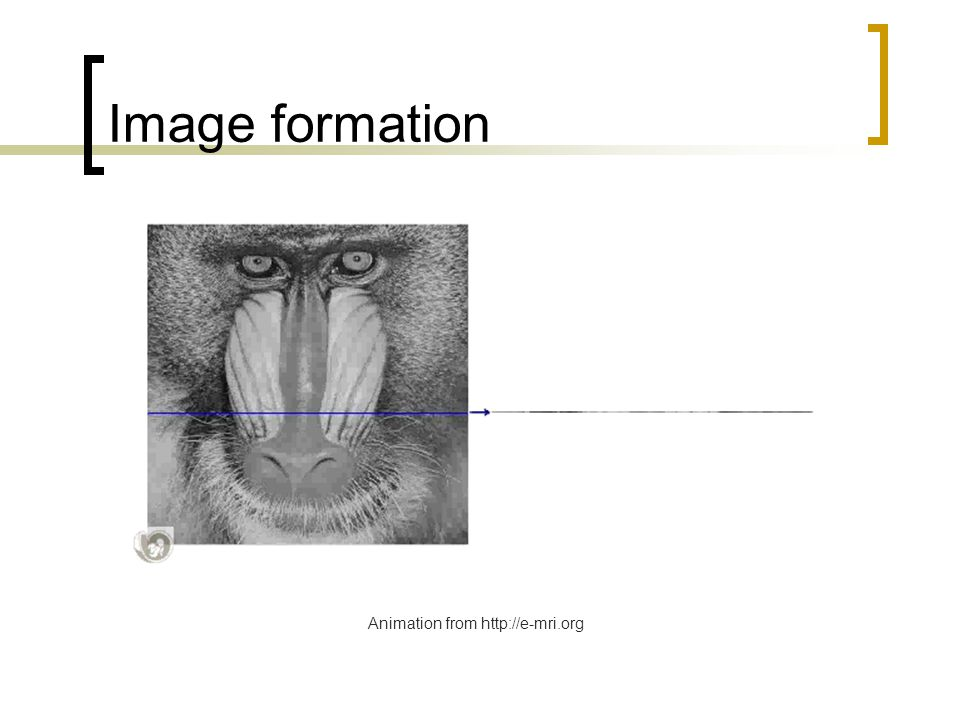 Image formation Animation from http://e-mri.org