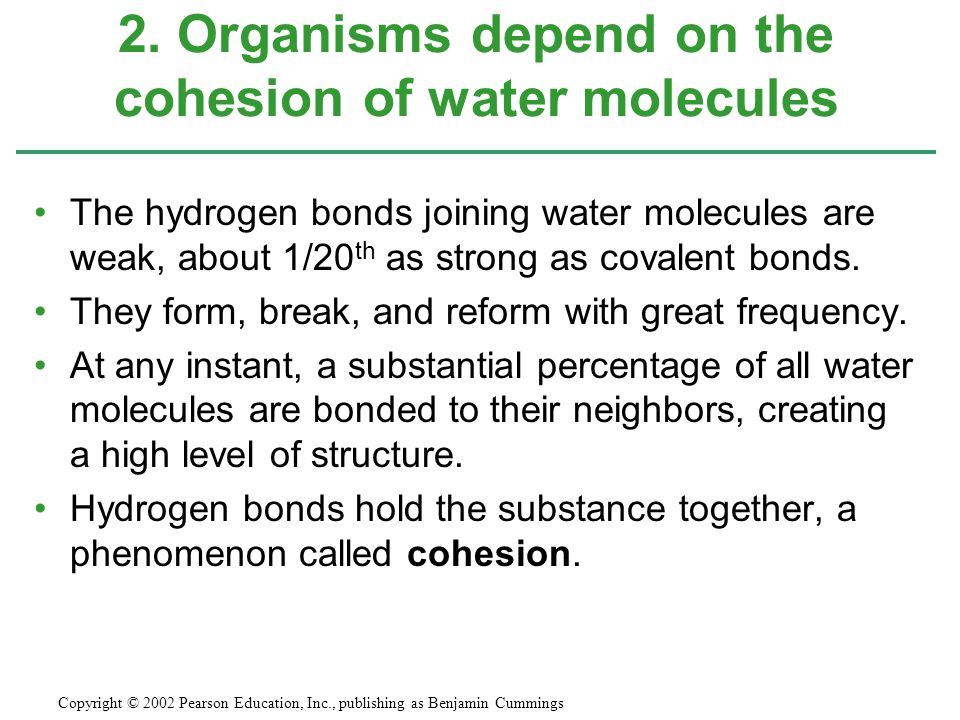 The hydrogen bonds joining water molecules are weak, about 1/20 th as strong as covalent bonds. They form, break, and reform with great frequency. At