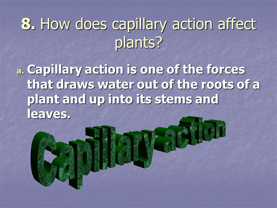 8. How does capillary action affect plants? a. Capillary action is one of the forces that draws water out of the roots of a plant and up into its stem