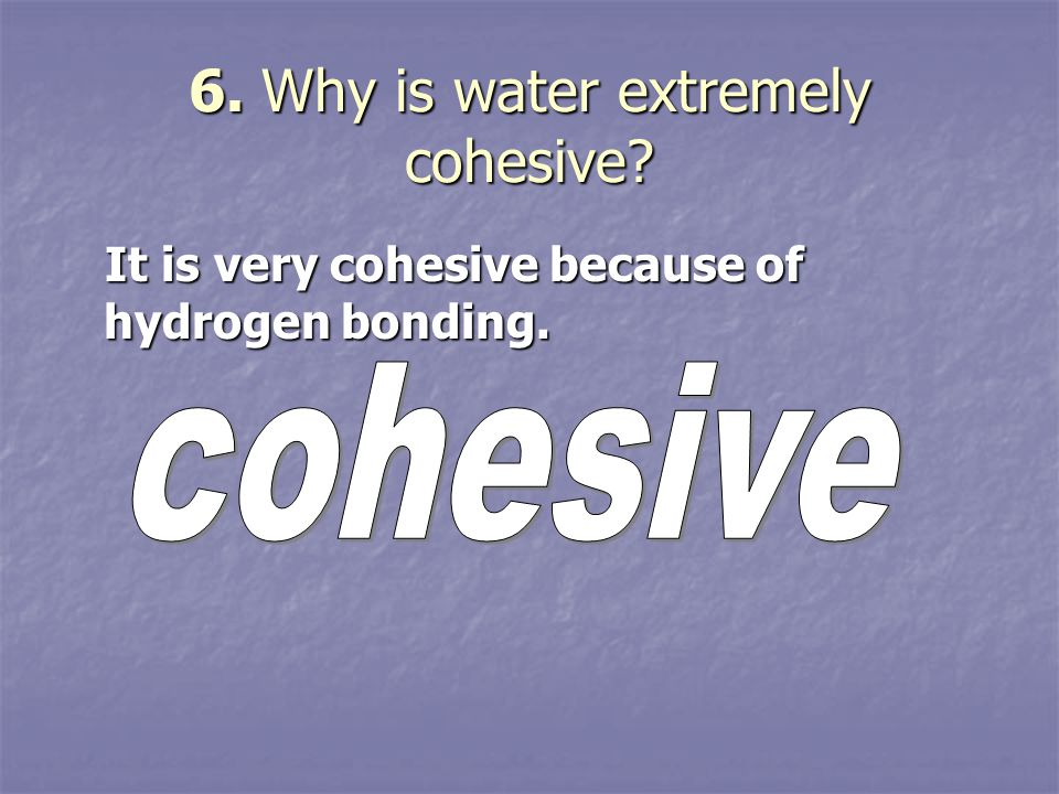 6. Why is water extremely cohesive? It is very cohesive because of hydrogen bonding. It is very cohesive because of hydrogen bonding.