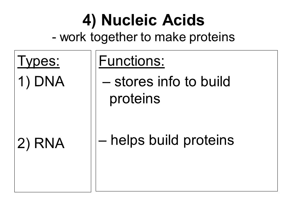 4) Nucleic Acids - work together to make proteins Functions: – stores info to build proteins – helps build proteins Types: 1) DNA 2) RNA