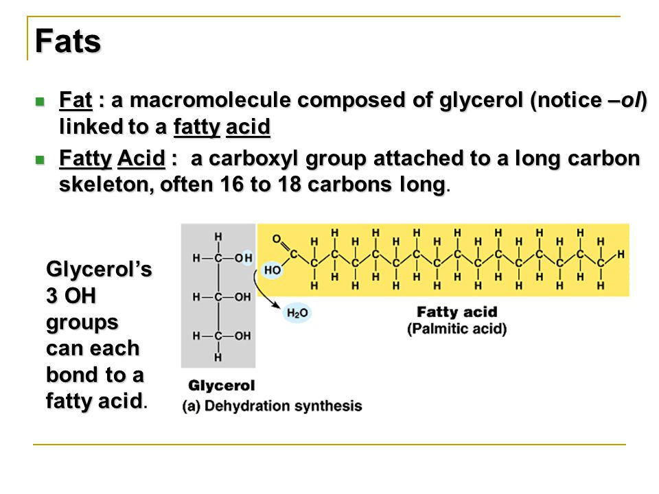 Fat : a macromolecule composed of glycerol (notice –ol) linked to a fatty acid Fat : a macromolecule composed of glycerol (notice –ol) linked to a fatty acid Fatty Acid : a carboxyl group attached to a long carbon skeleton, often 16 to 18 carbons long Fatty Acid : a carboxyl group attached to a long carbon skeleton, often 16 to 18 carbons long.