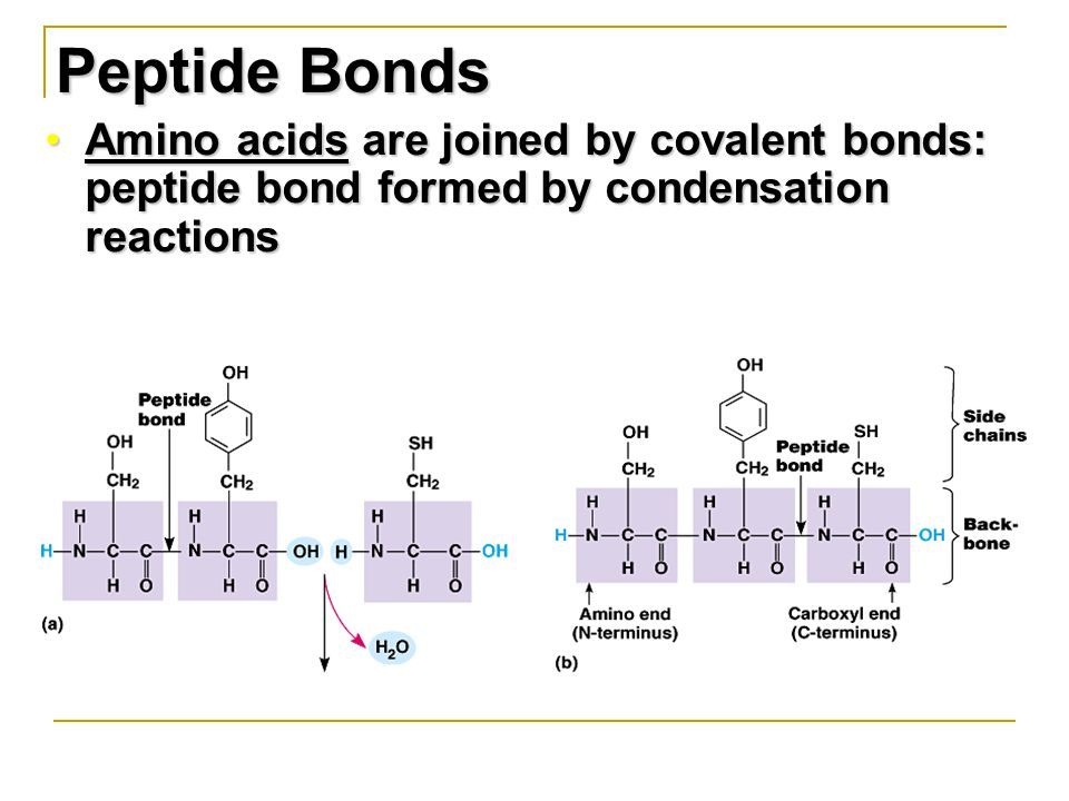 Peptide Bonds Amino acids are joined by covalent bonds: peptide bond formed by condensation reactionsAmino acids are joined by covalent bonds: peptide bond formed by condensation reactions