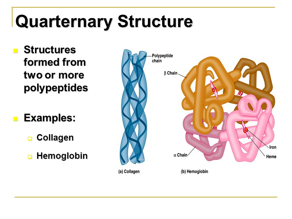 Quarternary Structure Structures formed from two or more polypeptides Structures formed from two or more polypeptides Examples: Examples:  Collagen  Hemoglobin
