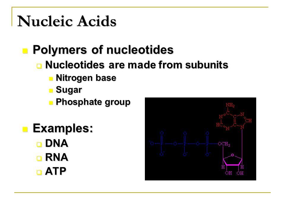 Polymers of nucleotides Polymers of nucleotides  Nucleotides are made from subunits Nitrogen base Nitrogen base Sugar Sugar Phosphate group Phosphate group Examples: Examples:  DNA  RNA  ATP Nucleic Acids