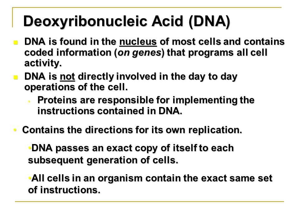 Deoxyribonucleic Acid (DNA) DNA is found in the nucleus of most cells and contains coded information (on genes) that programs all cell activity.