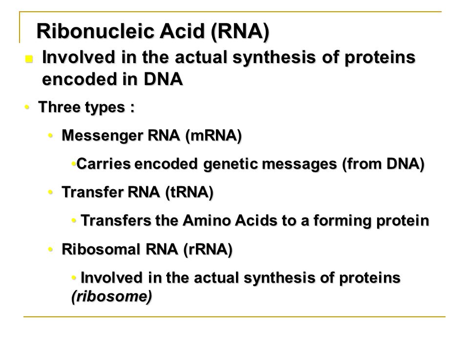 Ribonucleic Acid (RNA) Involved in the actual synthesis of proteins encoded in DNA Involved in the actual synthesis of proteins encoded in DNA Three types : Three types : Messenger RNA (mRNA) Messenger RNA (mRNA) Carries encoded genetic messages (from DNA)Carries encoded genetic messages (from DNA) Transfer RNA (tRNA) Transfer RNA (tRNA) Transfers the Amino Acids to a forming protein Transfers the Amino Acids to a forming protein Ribosomal RNA (rRNA) Ribosomal RNA (rRNA) Involved in the actual synthesis of proteins (ribosome) Involved in the actual synthesis of proteins (ribosome)