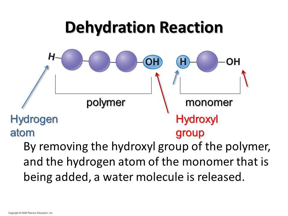 polymer monomer Hydrogen atom Hydroxyl group Dehydration Reaction By removing the hydroxyl group of the polymer, and the hydrogen atom of the monomer