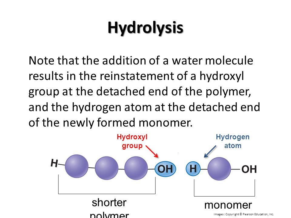 Hydrolysis Note that the addition of a water molecule results in the reinstatement of a hydroxyl group at the detached end of the polymer, and the hyd