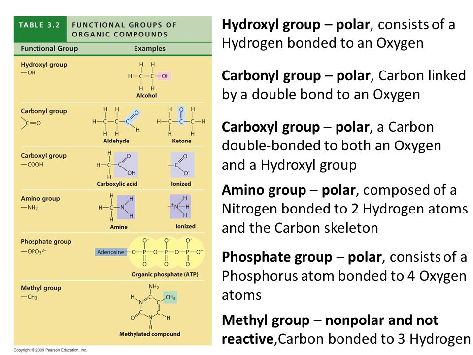 Same structure, but different functional groups Estradiol – female sex hormone Testosterone – male sex hormone Hydroxyl group Carbonyl group Methyl group Female Lion Male Lion