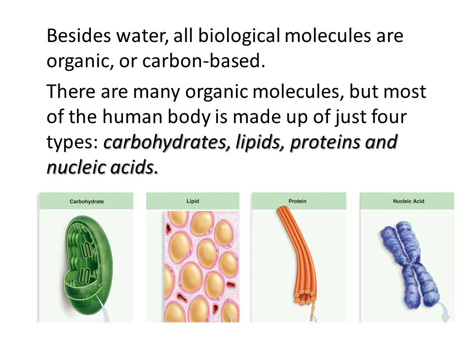 macromolecules Carbohydrates, lipids, proteins and nucleic acids are called macromolecules, and are the building blocks of cells and their chemical machinery.