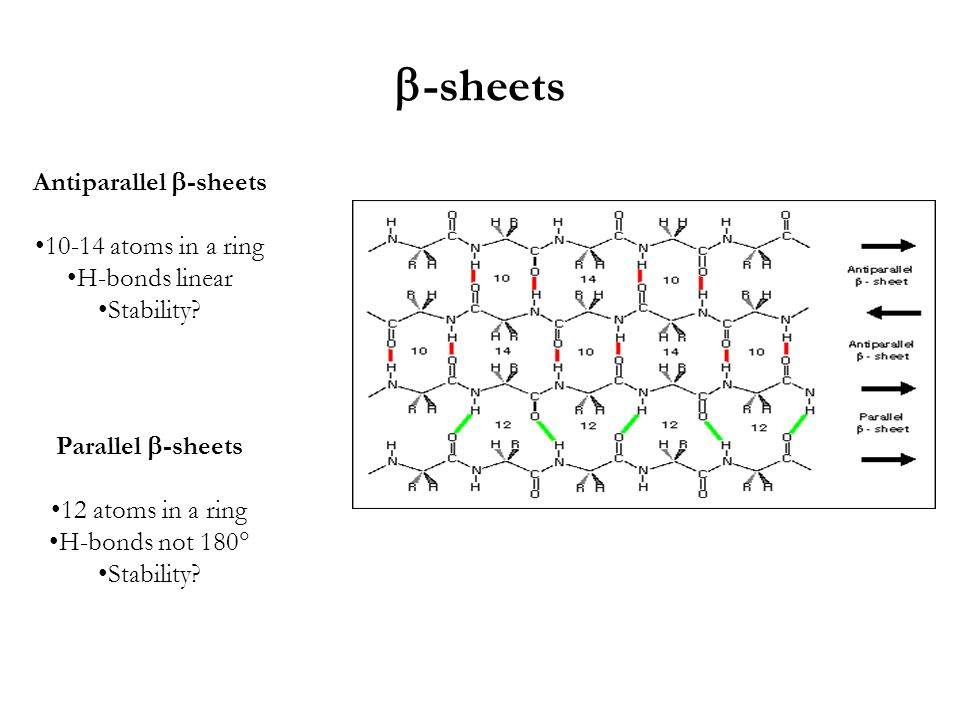  -sheets Antiparallel  -sheets 10-14 atoms in a ring H-bonds linear Stability.