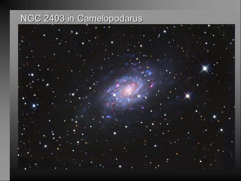 NGC 2403 in Camelopodarus