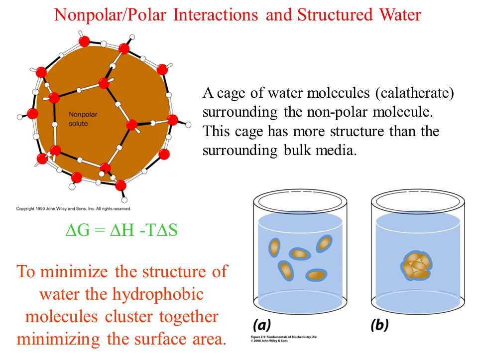 Nonpolar/Polar Interactions and Structured Water A cage of water molecules (calatherate) surrounding the non-polar molecule.