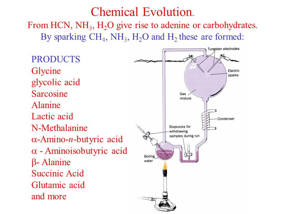 Chemical Evolution. From HCN, NH 3, H 2 O give rise to adenine or carbohydrates.