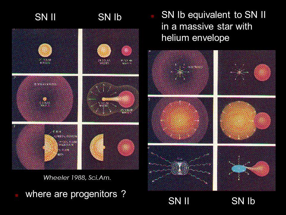 n SN Ib equivalent to SN II in a massive star with helium envelope SN IISN Ib Wheeler 1988, Sci.Am.