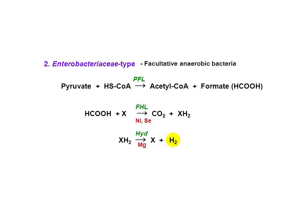 Pyruvate + HS-CoA → Acetyl-CoA + Formate (HCOOH) PFL HCOOH + X → CO 2 + XH 2 XH 2 → X + FHL Ni, Se Mg Hyd H2H2 2.