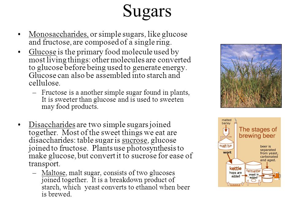 Sugars Monosaccharides, or simple sugars, like glucose and fructose, are composed of a single ring. Glucose is the primary food molecule used by most