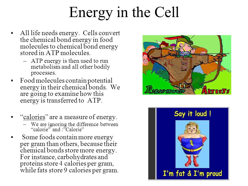 Energy in the Cell All life needs energy. Cells convert the chemical bond energy in food molecules to chemical bond energy stored in ATP molecules. –A