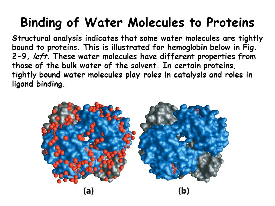 Colligative Properties of H 2 O Solutes alter the vapor pressure, boiling point, melting point, and osmotic pressure of aqueous solutions (i.e., the colligative properties of water).