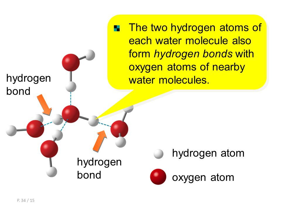P. 33 / 15 The oxygen atom of each water molecule forms hydrogen bonds with two hydrogen atoms of nearby water molecules. Structure and bonding of ice