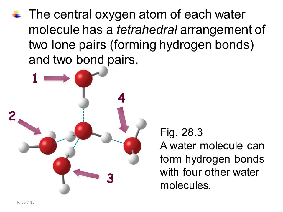 P. 34 / 15 The two hydrogen atoms of each water molecule also form hydrogen bonds with oxygen atoms of nearby water molecules. hydrogen bond hydrogen