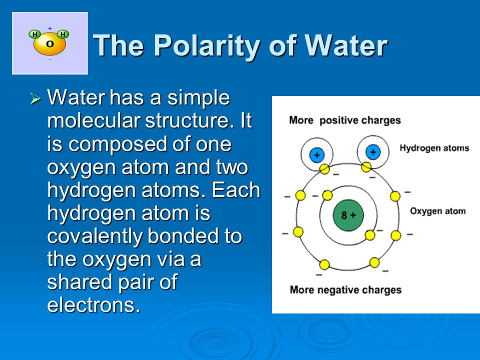 The Polarity of Water  Water has a simple molecular structure.