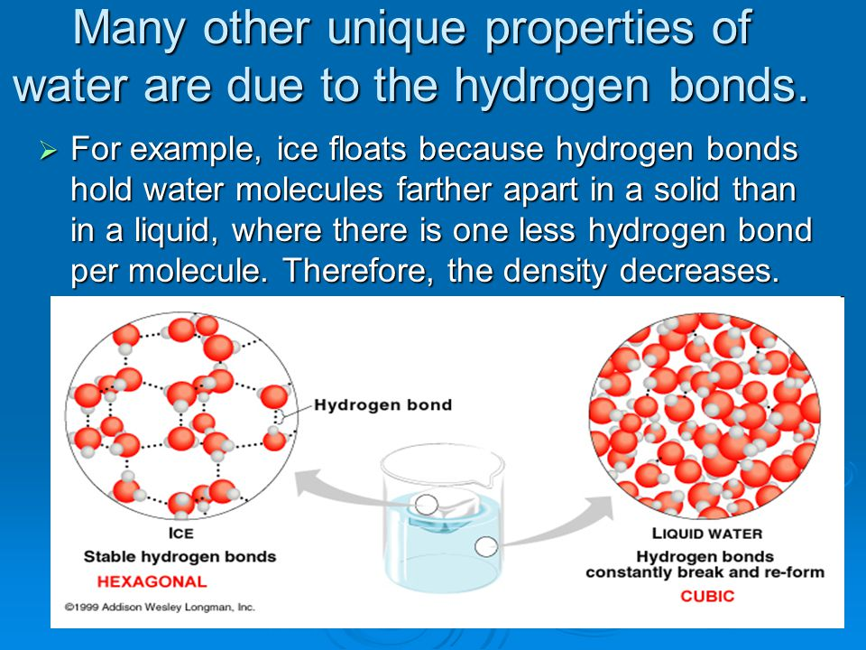 Many other unique properties of water are due to the hydrogen bonds.