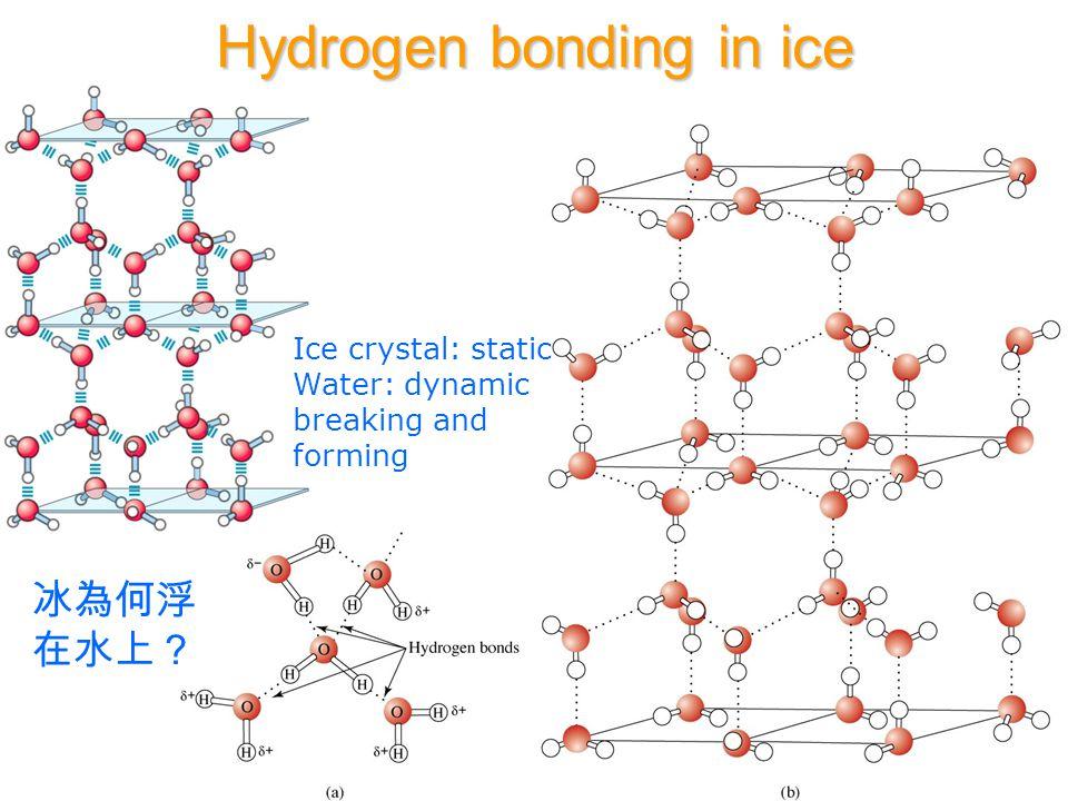 Common Hydrogen Bonds * Peptides X-H:::A X= Hydrogen bond donor N, O, S A= Hydrogen bond acceptor O, N