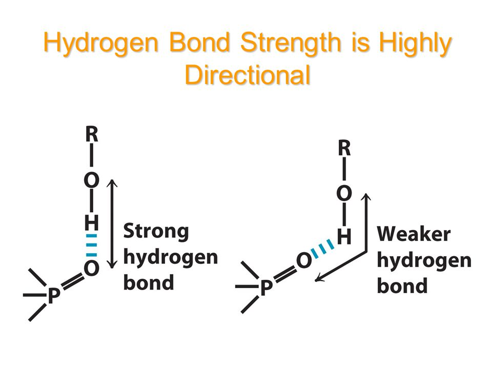 重要生物分子間氫鍵