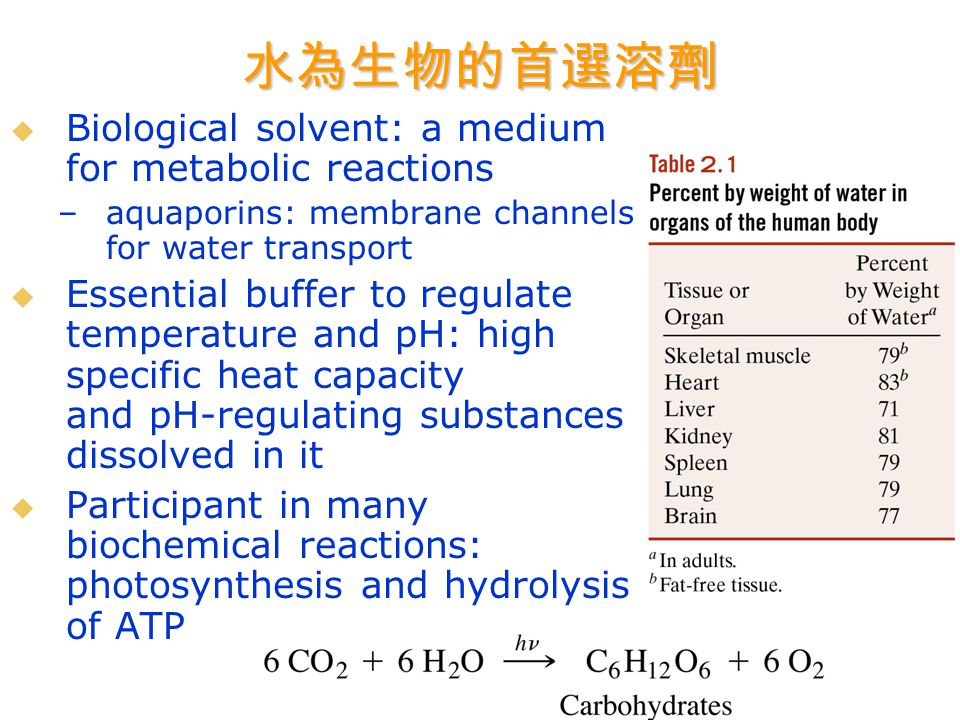 水為生物的首選溶劑   Biological solvent: a medium for metabolic reactions – –aquaporins: membrane channels for water transport   Essential buffer to regulate temperature and pH: high specific heat capacity and pH-regulating substances dissolved in it   Participant in many biochemical reactions: photosynthesis and hydrolysis of ATP