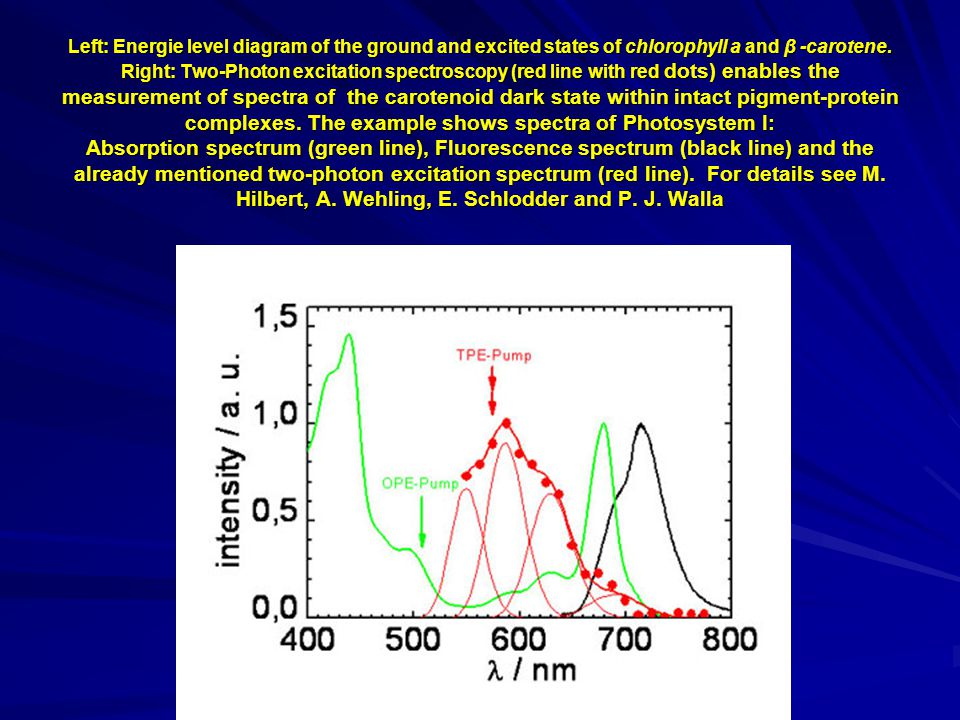 Left: Energie level diagram of the ground and excited states of chlorophyll a and β -carotene.