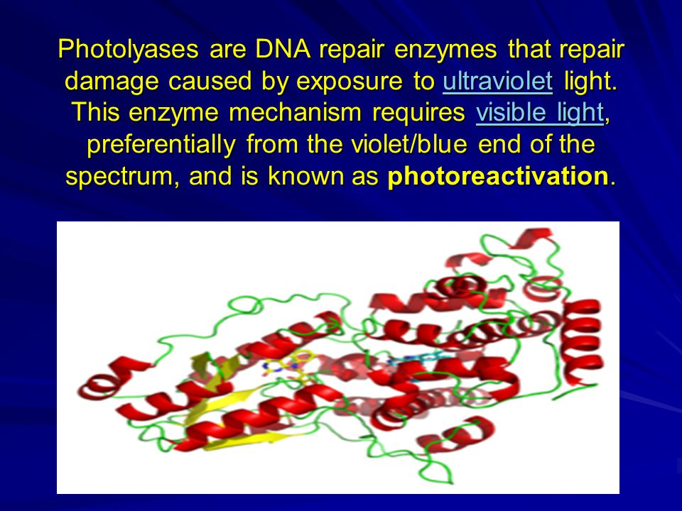 Photolyases are DNA repair enzymes that repair damage caused by exposure to ultraviolet light.