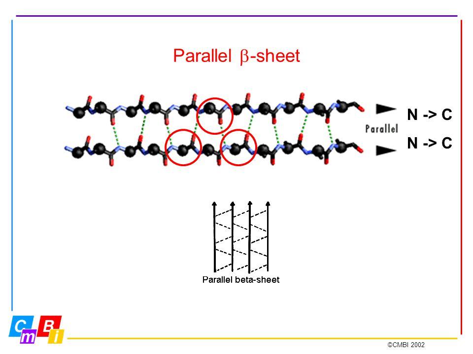 ©CMBI 2002 Parallel  -sheet N -> C