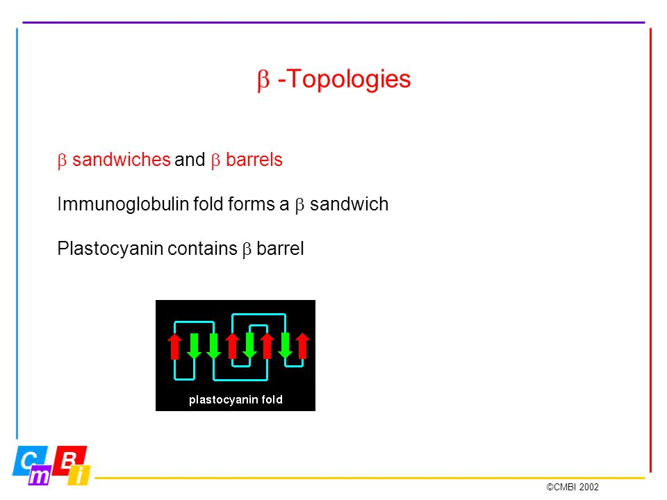 ©CMBI 2002  -Topologies  sandwiches and  barrels Immunoglobulin fold forms a  sandwich Plastocyanin contains  barrel