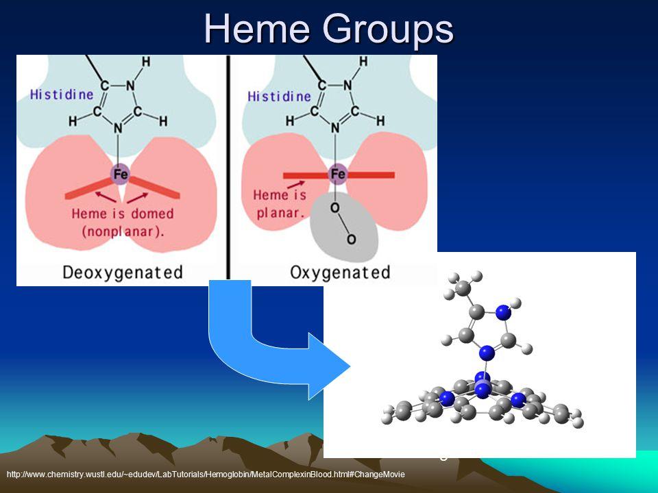 Heme Groups http://www.chemistry.wustl.edu/~edudev/LabTutorials/Hemoglobin/MetalComplexinBlood.html#ChangeMovie Hemoglobin: active site