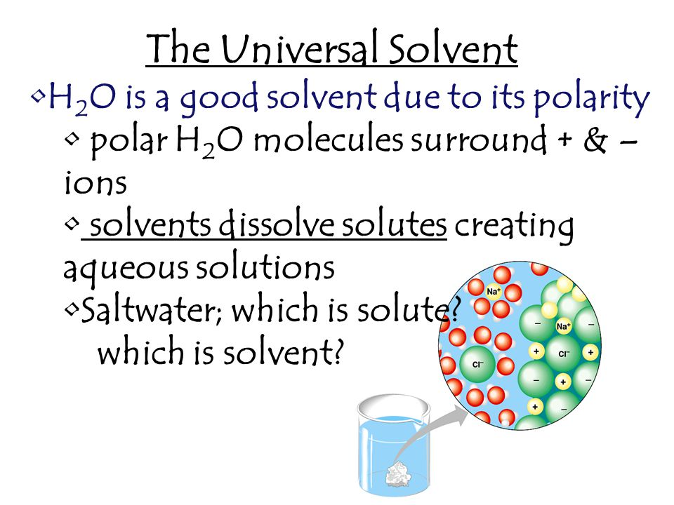 The Universal Solvent H 2 O is a good solvent due to its polarity polar H 2 O molecules surround + & – ions solvents dissolve solutes creating aqueous solutions Saltwater; which is solute.