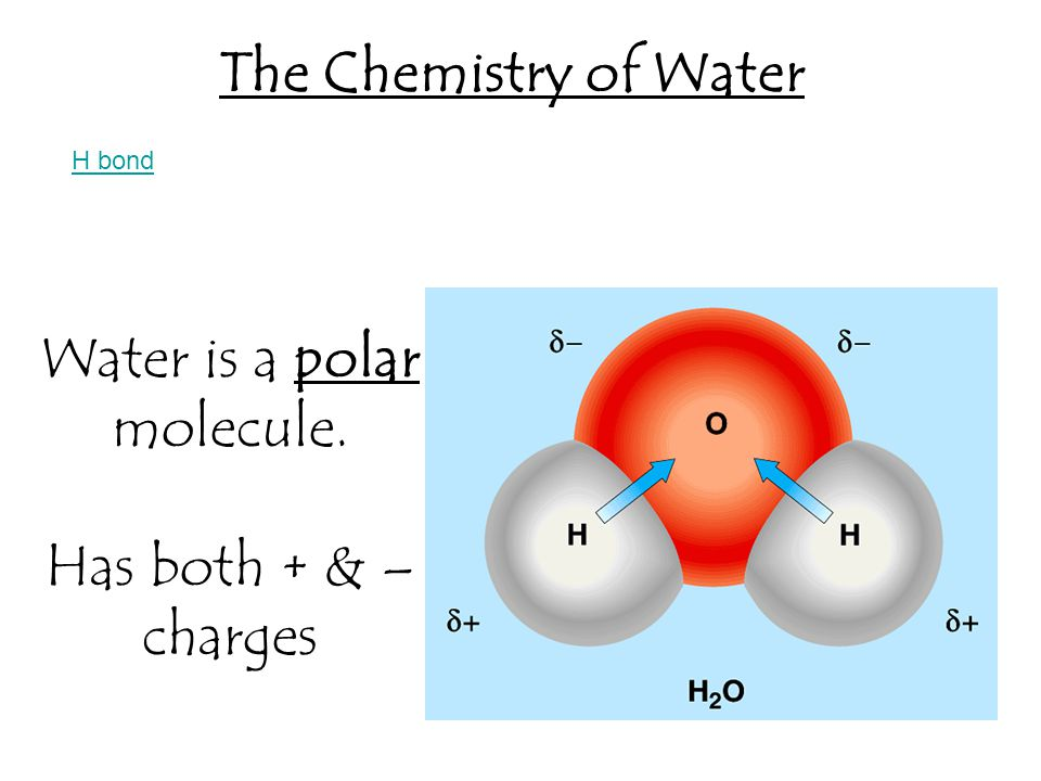 1. When water molecules form hydrogen bonds with other water molecules. Cohesion