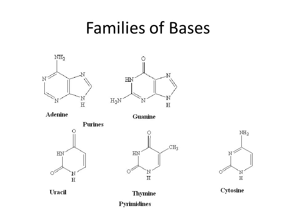 Families of Bases