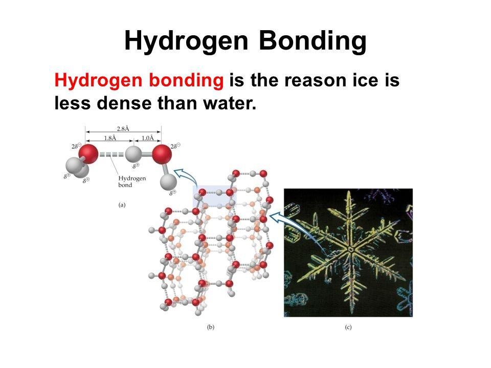 Hydrogen Bonding Hydrogen bonding is the reason ice is less dense than water.