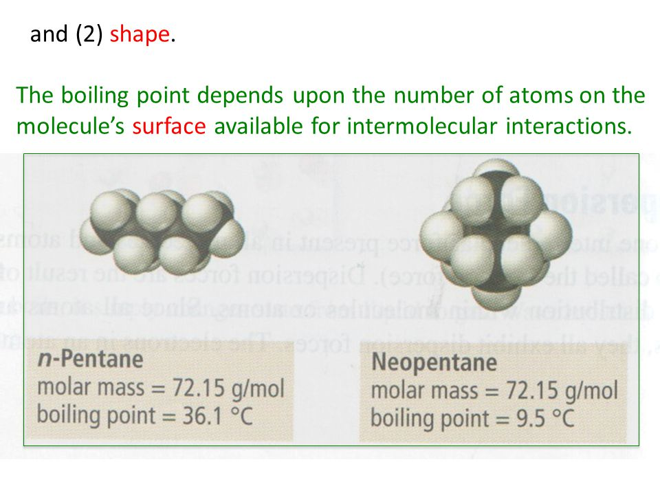 The boiling point depends upon the number of atoms on the molecule's surface available for intermolecular interactions.