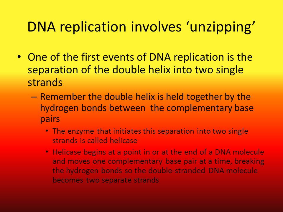 DNA replication involves 'unzipping' One of the first events of DNA replication is the separation of the double helix into two single strands – Rememb
