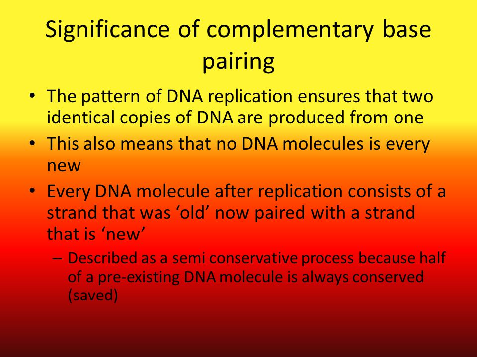 Significance of complementary base pairing The pattern of DNA replication ensures that two identical copies of DNA are produced from one This also mea