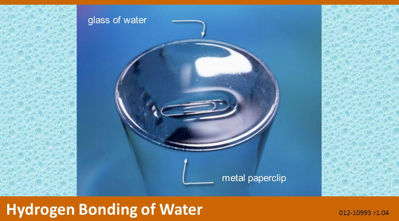 glass of water metal paperclip Hydrogen Bonding of Water 012-10993 r1.04