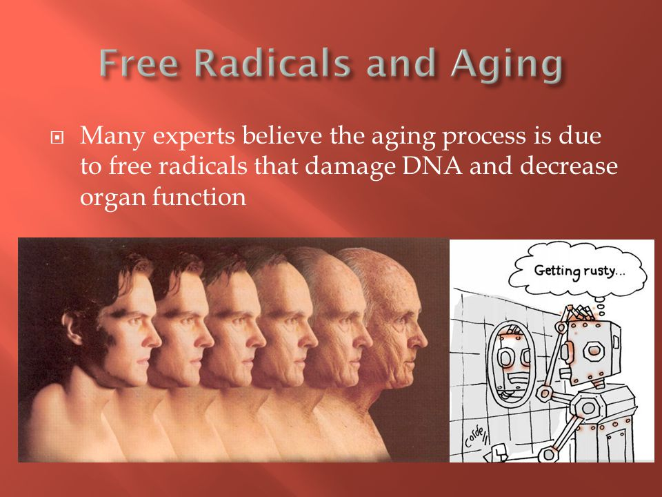  Many experts believe the aging process is due to free radicals that damage DNA and decrease organ function